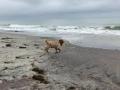 Sonny at Capo Beach1
