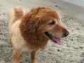 Sonny at Capo Beach2