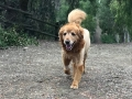 Sonny trail hike