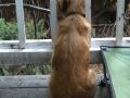 Bomondi watching