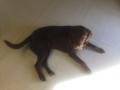 Kopper laying down1
