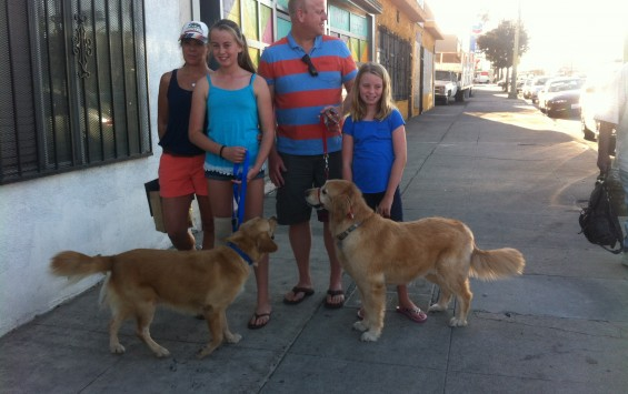 bradshaw adopted 3