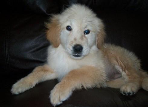 atticus puppy