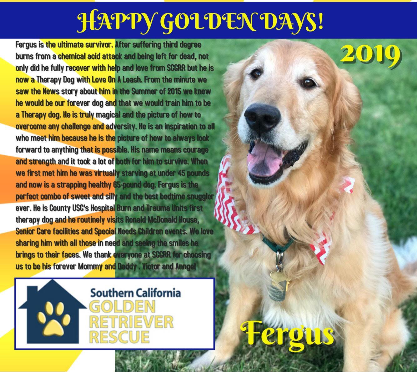 Southern California Golden Retriever Rescue Finding Loving