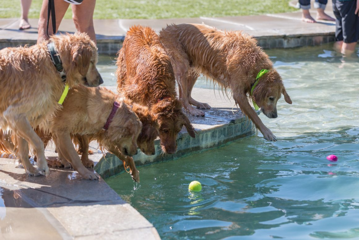 Dogs, Swimming and Pool Safety