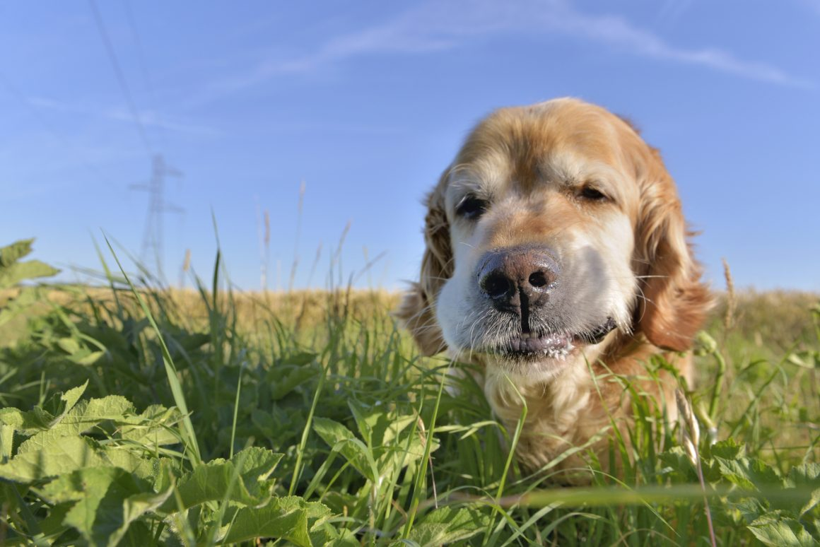 Common Poisons that dogs ingest